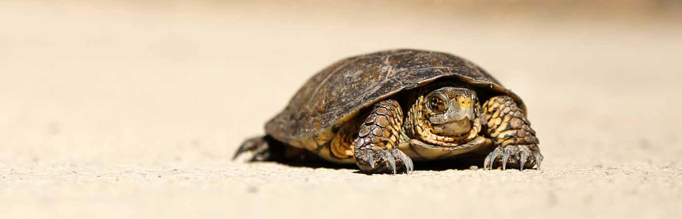 village des tortues dans le var