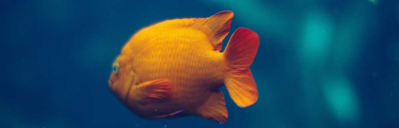 aquarium a visiter dans le var