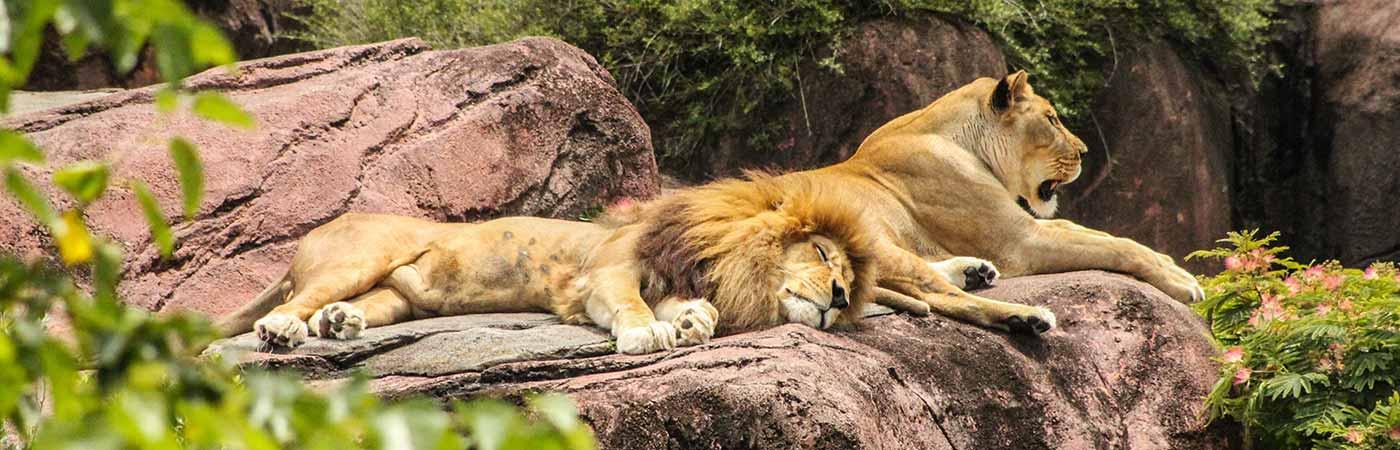 zoa sanary bandol parc animalier et exotique