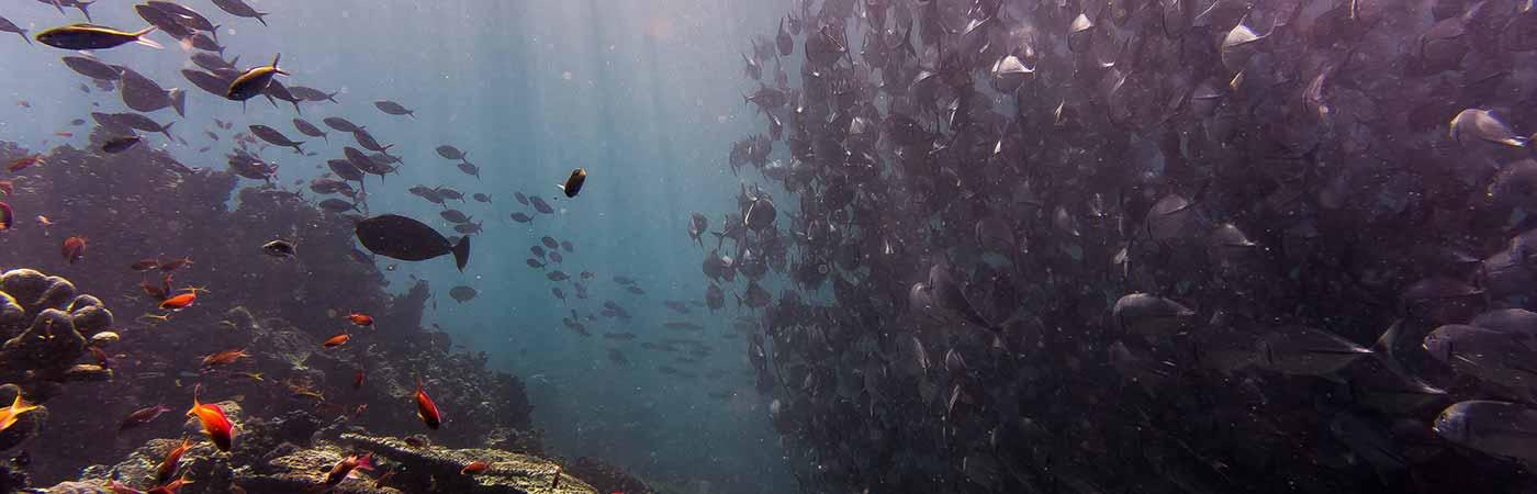 Plongée sous marine à Sanary sur Mer dans le Var